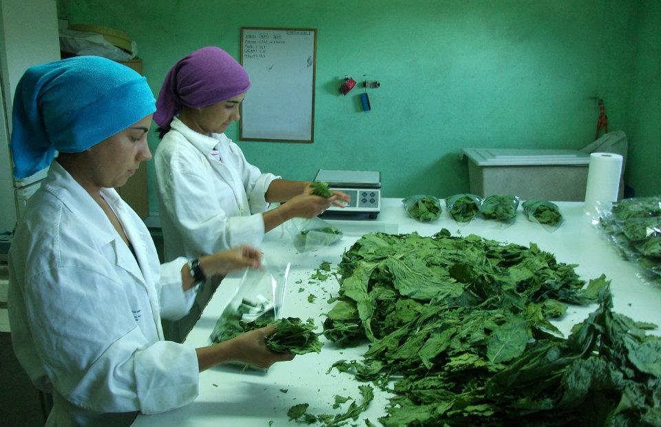 Conocemos a Milhulloa, cooperativa de Lugo de producción ecológica de hortalizas y plantas medicinales