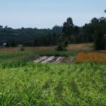 Milhulloa cultivos en el Blog e+e